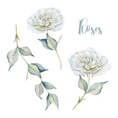 Hand drawn watercolor set with delicate white roses and branch