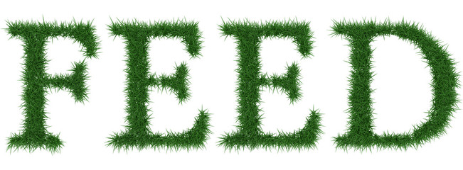 Feed - 3D rendering fresh Grass letters isolated on whhite background.