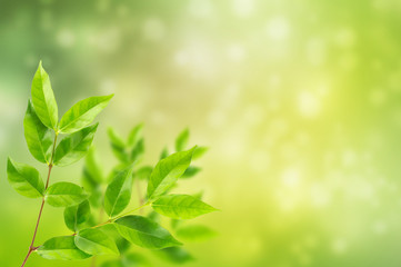 fresh and green leaves abstract bokeh background