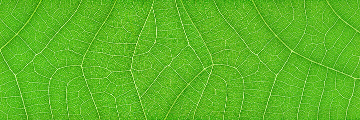 horizontal green leaf texture for pattern and background Fotoväggar