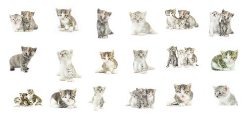 Different kittens collection isolated on white background