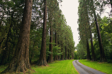Redwoods and other amazing trees at Minsteracres, Northumberland