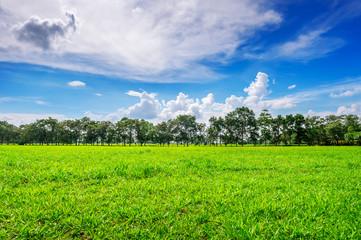 Wall Mural - Green grass, Background image of lush grass field under blue sky