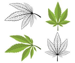 Cannabis leaf on a white background