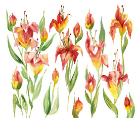 Watercolor painting. Red flowers on white background.