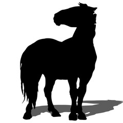 rearing up horse fine vector silhouette and outline - graceful black stallions against white