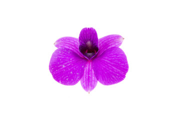 orchids.image