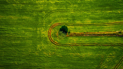 Aluminium Prints Green Aerial view of the vegetable field from drone
