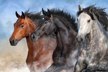 Wall Mural - Horses run fast in desert dust