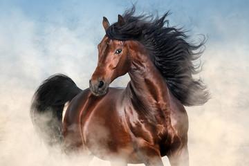 Obraz Bay stallion with long mane run fast in desert dust  - fototapety do salonu