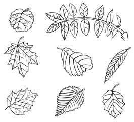 tree leaves drawing