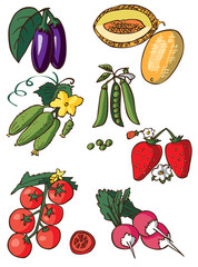 vegetables, berry and melon on white background