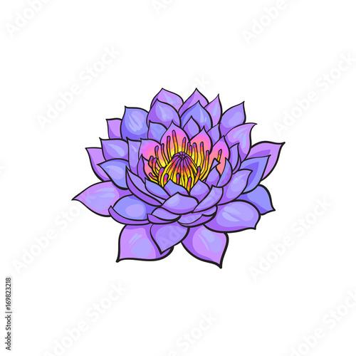 Vector sketch cartoon lotus flower blossom blooming isolated vector sketch cartoon lotus flower blossom blooming isolated illustration on a white background symbol mightylinksfo