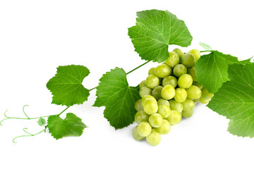 Vine with a bunch of grapes on a white background