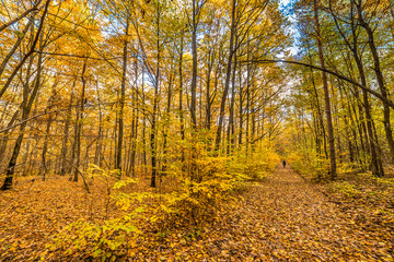 Path in the forest, autumn landscape, Poland