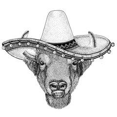 Wild bison wearing sombero Old classic vintage style illustration for t-shirt, poster, banner, embem, badge, tattoo
