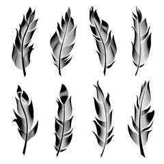 Vector set of stylized bird feathers. Linear collection for decoration.