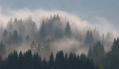nebel steigt aus nadelwald