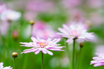 Macro image of pink flower in selective focus