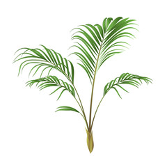Palm decoration house plant vintage vector illustration editable hand drawn