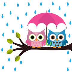colorful owls with umbrella under the rain