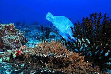 Plastic bag on corals