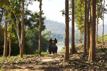 ride elephant in Luang Prabang, Laos