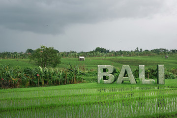 Realisic Bali 3D text inside rice fields. Bali Indonesia