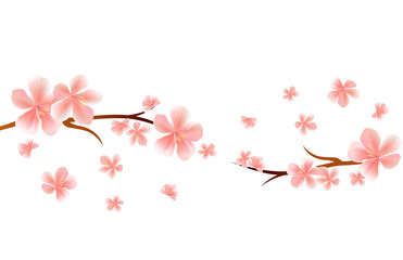 Blossom Branches of Sakura with Pink flying flowers isolated on White background. Apple-tree flowers. Cherry blossom. Vector