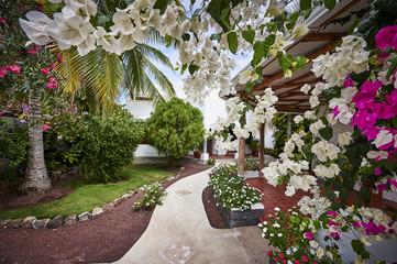 a beautiful tropical island home