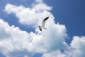 One seagull on the blue sky background