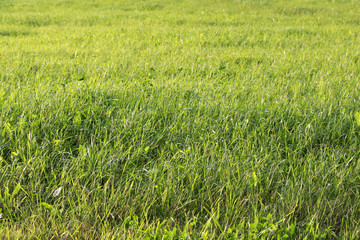 bright juicy green grass on the city wasteland.