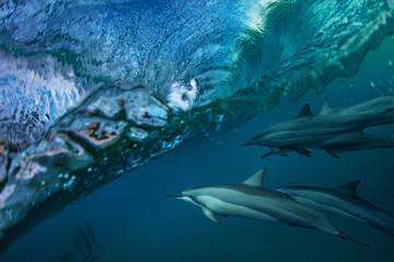 Dolphins Under Wave. Sea water full of life