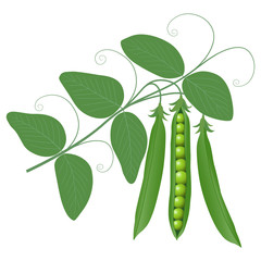 peas on a branch