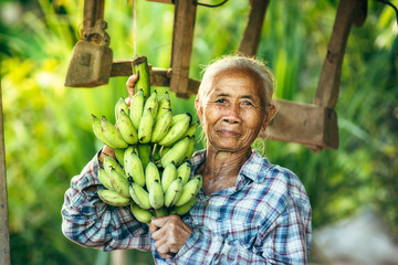 Woman farmer holding green banana on farmland.
