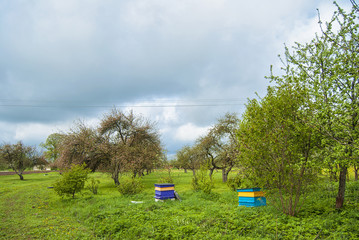 Blooming apple orchard and bee hives in spring located in Latvia