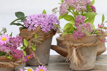 Alte Blumentöpfe mit Pflanzen als Dekoration