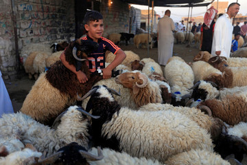 A boy poses for a photo between sheep at a livestock market during the Eid al-Adha festival in Najaf south of Baghdad
