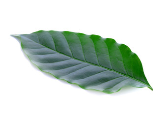 Wall Mural - Coffee leaf on white background
