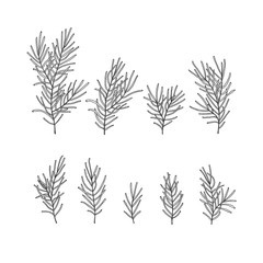 Hand drawn design vector elements. Forest collection pine branches isolated on white background.