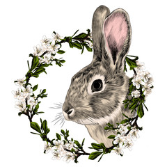rabbit in a frame of the tree sketch vector graphics color picture