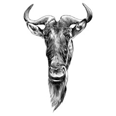wildebeest head sketch vector graphics monochrome illustration black and white