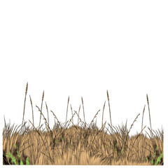 dry grass sketch vector graphics color picture