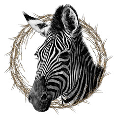 Zebra head framed sketch vector graphics monochrome drawing