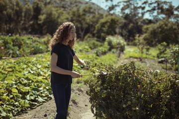Woman cutting plants at farm
