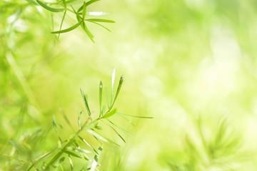 Grüner Hintergrund mit zarten Blättern