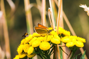 Beautiful yellow flower and little butterfly