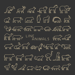 Linear set of domestic and wild animals