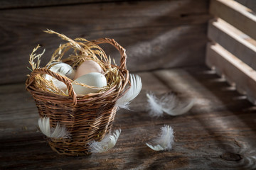 Fresh free range eggs from the countryside