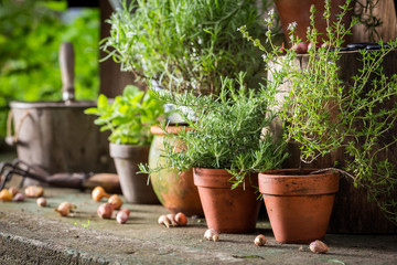Aromatic and healthy herbs on the old porch